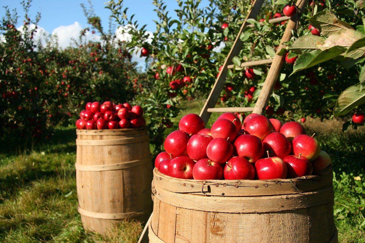 Bonus imprese agricole