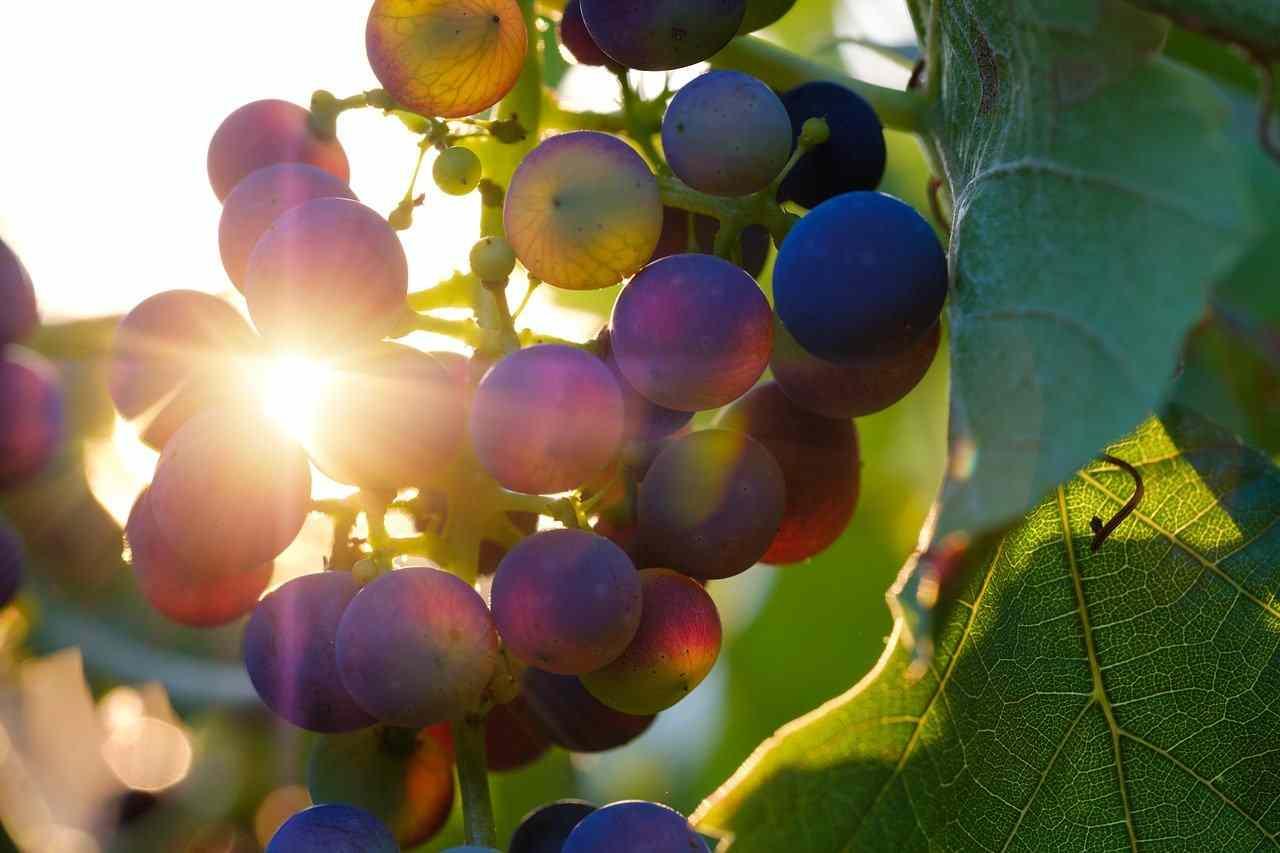 Consumo alcol, il piano europeo preoccupa i produttori di vino