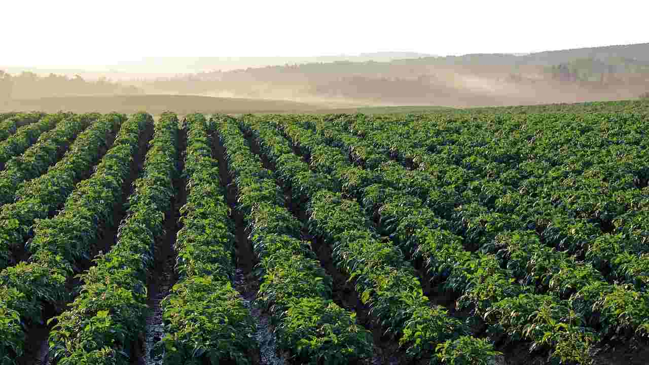 WWF, soia, olio di palma e allevamento causano deforestazione