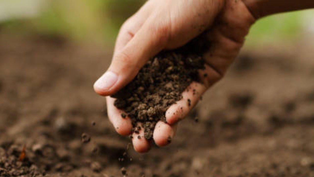 terra agricoltura