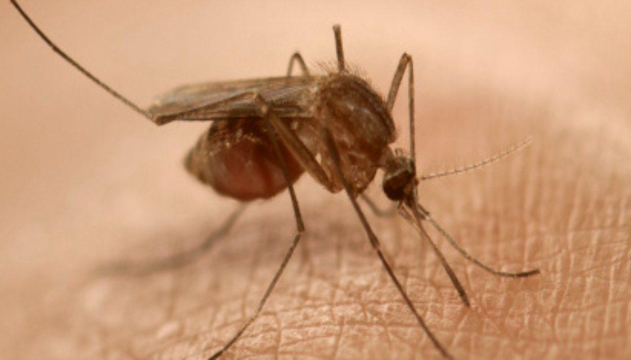 malaria zanzara
